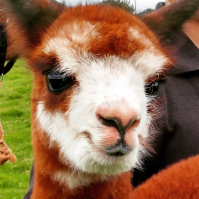 Meet the animals at Farmer Parrs Animal World, Fleetwood
